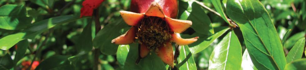 openfruit